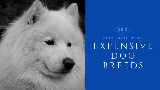 Top 10 Most Expensive Dog Breeds [ NEW POST 2019 ]